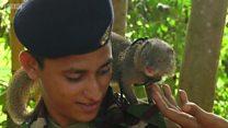 श्रीलंकेच्या लष्करात स्फोटकं शोधून देणारे मुंगूस