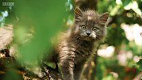 Чому село в Новій Зеландії забороняє котів?