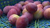 Volunteers rescuing unwanted fruit and veg