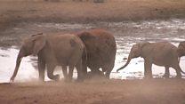Pronašli način da žive pored slonova