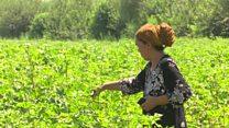 زنان و آبیاری مشارکتی در تاجیکستان