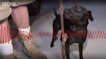 [BBC 라디오] '쥐 소탕' 나선 뉴욕 강아지들... 효과는?