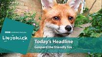 Lingohack - урок англійської мови про приязного лиса