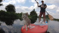 'Why I go paddleboarding with my cat'
