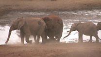 Чим кенійські студенти лякають слонів