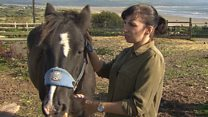 Horses healing scars of domestic abuse