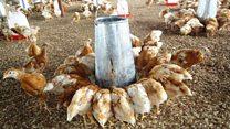 Pourquoi il vous faut investir dans l'élevage en Afrique?