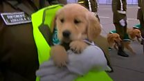 Puppies steal spotlight at military parade