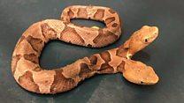 Sss...Sss...Snake Snake!