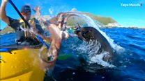 アザラシ、人間をタコで殴る ニュージーランド