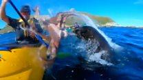 Морський котик шмагонув хлопця восьминогом