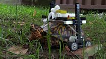 Tortoise saved by Lego wheelchair