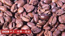 科技天地(粤语):气候变暖 咖啡变差?