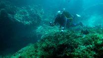 ما معنى عبارة seabed؟