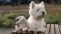 Друг для Джейка: как псу из Москвы ищут плюшевых зайцев по всему миру