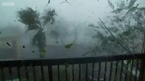 الاعصار مايكل يقتلع أشجارا في فلوريدا