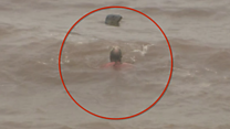 Swimmer braves Storm Callum for dip with seal