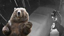 В США медведь залез в машину в надежде раздобыть чего-нибудь вкусненького