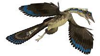 Reconstructing the 'first bird'