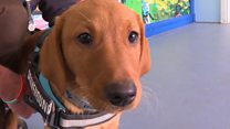 The dogs who help veterans with PTSD