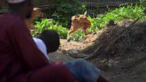 NIGERIA : Maltraitance dans certaines écoles coraniques