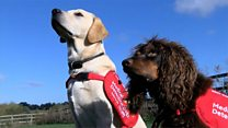 Can dogs sniff out malaria?