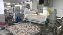 Jobs boost for 'world's biggest scampi factory'
