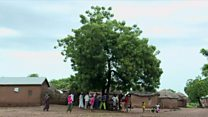 ဂါနာက ဖုန်းလိုင်းကောင်းတဲ့ သစ်ပင်