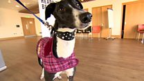 Dogs on the catwalk for charity