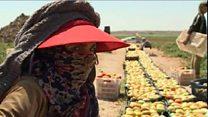 مشروع تشغيل اللاجئين السوريين في الأردن حقق أهدافه؟