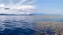 Як очистити океан від пластику?
