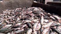 'Foreign trawlers are taking our fish'