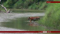 پنج کشور صاحب 70 درصد طبیعت دست نخورده در جهان