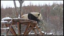 Снег одушевио панду
