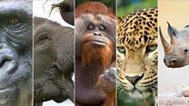 Эти животные могут скоро исчезнуть с лица Земли