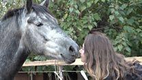 Jedini azil za konje u Srbiji