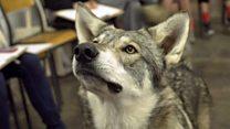 Por qué usan animales salvajes como modelos en estas clases de dibujo