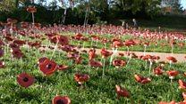 Oakham poppies