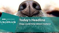Como cães farejadores podem ajudar a combater a malária