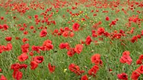 A widow's poem for fallen WW1 soldier