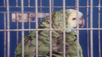 How Sinatra-loving parrot went on air