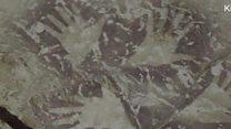 Пронађени најстарији цртежи животиња у пећини