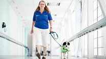 Monty the dog 'lifts up' hospital patients
