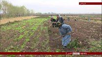 طرح پنج ساله برای افزایش صادرات تاجیکستان