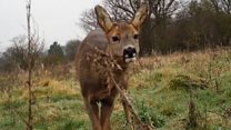 Free camera loan project films wildlife