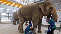 India's first elephant hospital opens