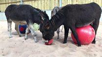 An indoor play barn - for donkeys?