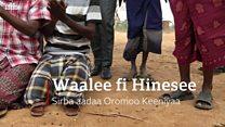 Waalee fi Hinesee: Sirba aadaa Oromoo Keeniyaa