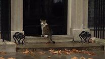 Downing Street cat gets a helping hand