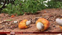 ભારતના ટેકાના ભાવોની જેમ તાન્ઝાનિયાના ખેડૂતો પણ આ સમસ્યાથી પીડાય છે